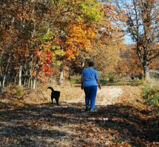 person walking with dog along lane