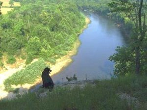 dog sitting on bluff overlooking river