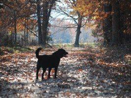 dog among trees