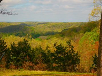 gently rolling hills covered in trees